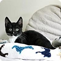 Adopt A Pet :: Cosmo - Hampton, VA