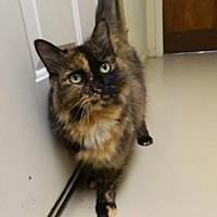 Adopt A Pet :: Missy - Randleman, NC