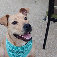 Adopt A Pet :: Chula - St. Louis, MO