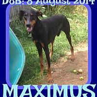 Adopt A Pet :: MAXIMUS - Sebec, ME
