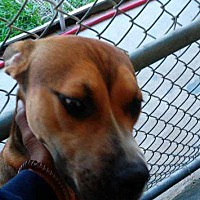 Adopt A Pet :: Ramsey - Waycross, GA