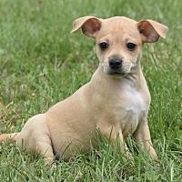 Adopt A Pet :: Pixie - Mechanicsburg, PA