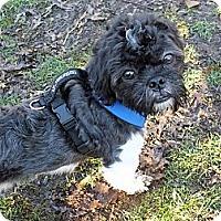 Adopt A Pet :: OREO - Warren, NJ