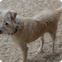 Adopt A Pet :: Remy - Phoenix, AZ