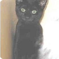 Adopt A Pet :: Riley and Jake - Mesa, AZ