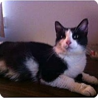 Adopt A Pet :: Tuxie - Montgomery, IL