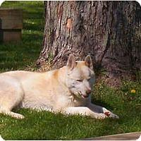Adopt A Pet :: Nogo - Belleville, MI