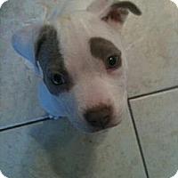Adopt A Pet :: Lenny - Killen, AL