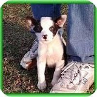 Adopt A Pet :: Foxy - Staunton, VA