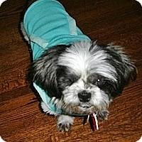 Adopt A Pet :: Dixie - Toronto, ON
