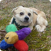 Adopt A Pet :: Tatum - Mocksville, NC