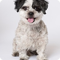 Adopt A Pet :: Jordie - Los Angeles, CA