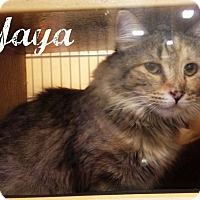 Adopt A Pet :: Yaya - Bentonville, AR