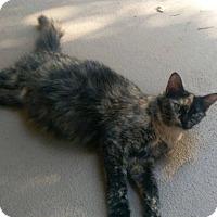 Adopt A Pet :: Lovey - Bentonville, AR