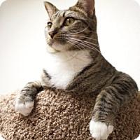 Adopt A Pet :: Friend - Orland, CA