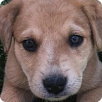 Adopt A Pet :: Tonya - Bedminster, NJ