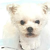 Adopt A Pet :: Sammy - Covina, CA