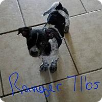 Adopt A Pet :: Ranger - Lorain, OH
