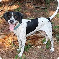 Adopt A Pet :: Zoe - York, PA