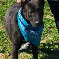 Adopt A Pet :: Radar - Savannah, TN