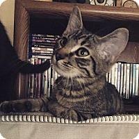 Adopt A Pet :: Hemi - Corinne, UT