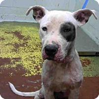 Adopt A Pet :: JAX - Atlanta, GA