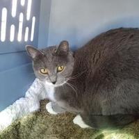 Adopt A Pet :: Safe7 - Tucson, AZ