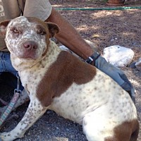 Adopt A Pet :: Theia - Golden Valley, AZ
