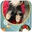 Photo 1 - Yorkie, Yorkshire Terrier/Schnauzer (Miniature) Mix Dog for adoption in Foster, Rhode Island - Allie