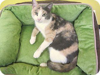 Calico Cat for adoption in Mobile, Alabama - Kali