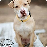 Adopt A Pet :: Hope - New Canaan, CT