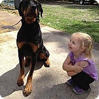 Adopt A Pet :: Jake - Pembroke Pines, FL