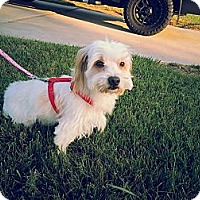 Adopt A Pet :: Otis - Santa Ana, CA