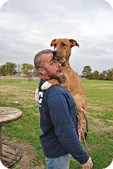 Great Dane/Labrador Retriever Mix Dog for adoption in Hagerstown, Maryland - Aladdin