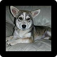 Adopt A Pet :: Baby Girl - Lawrenceville, GA