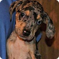 Adopt A Pet :: Sans - Ocala, FL
