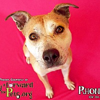 Adopt A Pet :: Rhonda - Sharon Center, OH