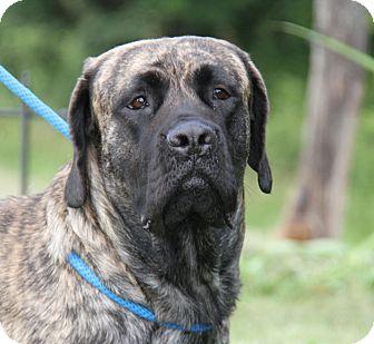 Mastiff Mix Dog for adoption in Marietta, Ohio - Rosie (Spayed)