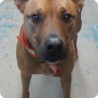 Adopt A Pet :: Oakley - Franklin, NH