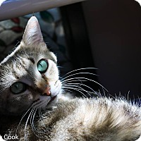 Adopt A Pet :: Carol - Ann Arbor, MI