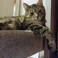 Adopt A Pet :: Jin - Vancouver, BC