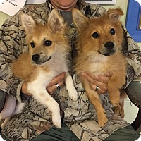 Adopt A Pet :: Teile - Baltimore, MD