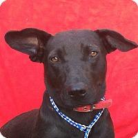 Adopt A Pet :: TAMMY - Corona, CA