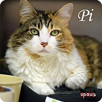 Adopt A Pet :: Pi - Negaunee, MI