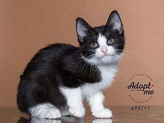 Adopt A Pet :: Maleficent  - Houston, TX