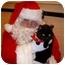 Photo 3 - Domestic Shorthair Cat for adoption in Saanichton, British Columbia - Luna