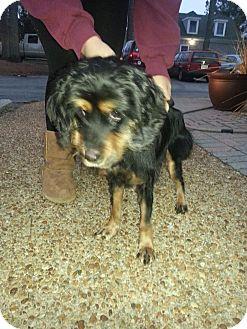 Cocker Spaniel Dog for adoption in Hampton, Virginia - Charlie