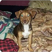 Adopt A Pet :: Perry - Johnsburg, IL