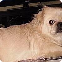 Adopt A Pet :: Daisy - Vansant, VA