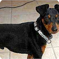 Adopt A Pet :: Vinny - Nashville, TN